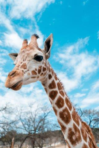Family Holiday Knowsley Safari Park & Chester Zoo